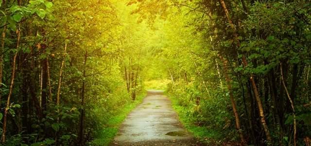 緑が生い茂る森林の小道がずっと続いている神秘的な画像