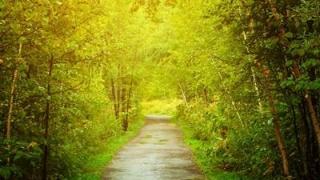 光が差す森の道