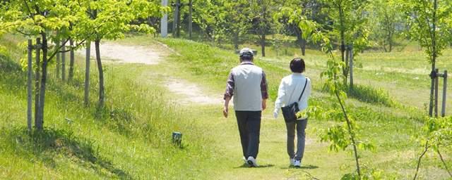 森林公園の遊歩道を仲良く散歩する老夫婦の後ろ姿を遠くから見る