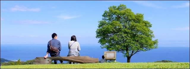 大きな国定公園のベンチに座る若い夫婦の後ろ姿。その向こうに大木が見える