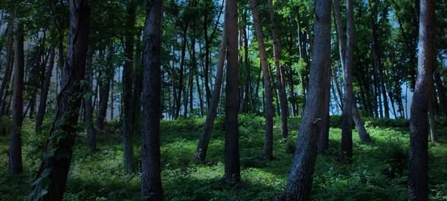 薄暗い森の中