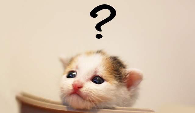 子猫が椅子にアゴを持たれて、頭上に?が浮かんでいる